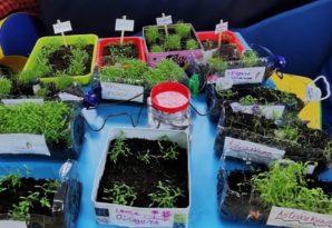 Este curso, en la ludoteca de Lonbo han plantado todo un huerto urbano. Las fotos son realmente bonitas.